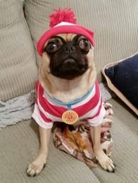 Waldo Pug